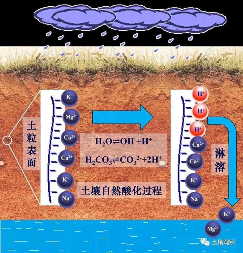 技术交流 || 土壤酸化的几个冷知识