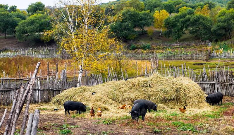 """9个月生猪存栏减少1.2亿头 专家:禁养区清理不能为猪肉涨价""""背锅"""""""